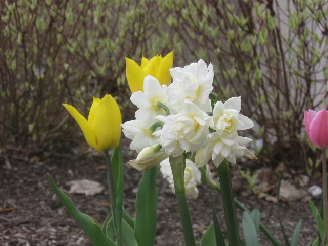 springflower3201