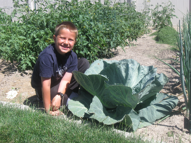 Sam the Man, and his cabbage